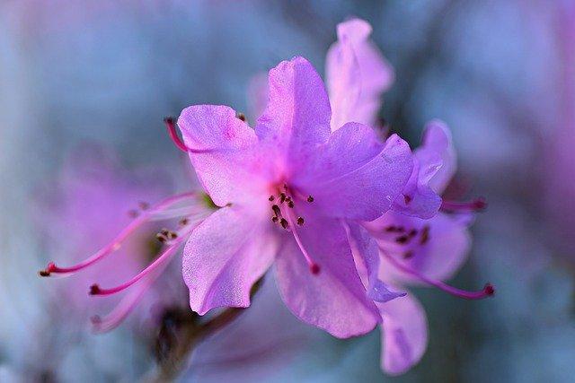 合弁花(ごうべんか)とは?合弁花の種類や離弁花との違いをご紹介!