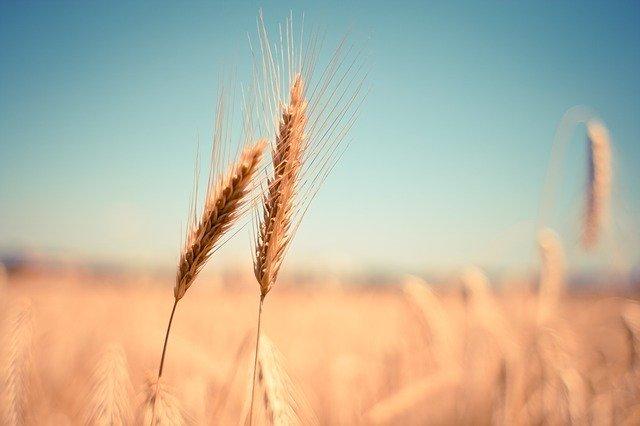 小麦の「ふすま」とは?部位の概要や成分・食べ方をご紹介!