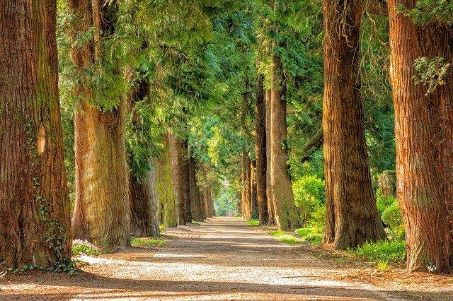手入れのいらない庭木10選!管理が簡単な庭木をランキング形式で紹介!