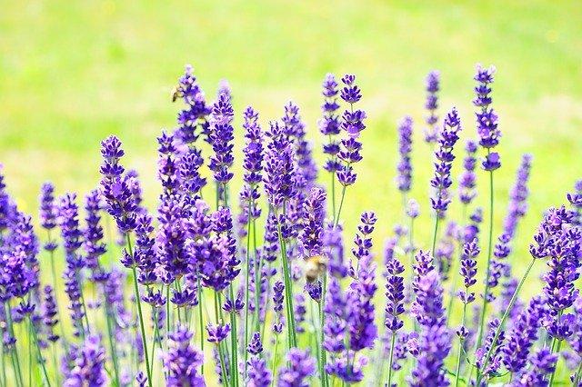 蚊よけになる植物8選!虫が嫌がる香りをもち、虫を寄せ付けない植物は?