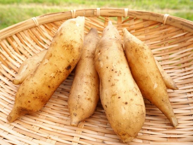 ヤーコンの育て方・栽培方法!種芋の植え方から収穫方法までご紹介!