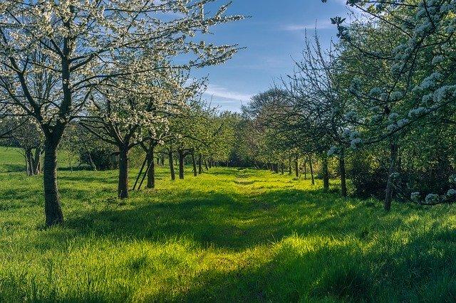 ナギナタガヤとは?草生栽培に使われる草の特徴や利用法をご紹介!