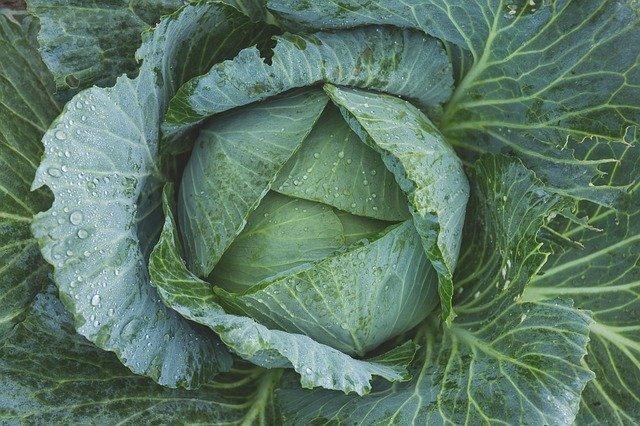 ヨトウムシの駆除方法3選!薬剤での防除から無農薬での対策まで紹介!