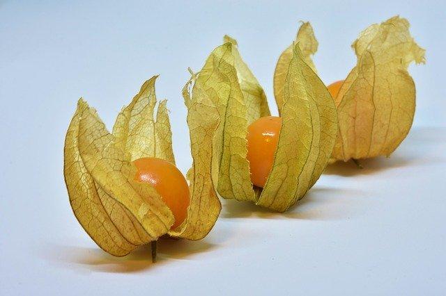ホオズキ(鬼灯)とは?味や旬の時期などの特徴や効能をご紹介!