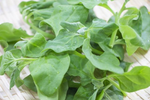 ツルナとは?その特徴・栄養から栽培方法や食べ方・レシピまで紹介!