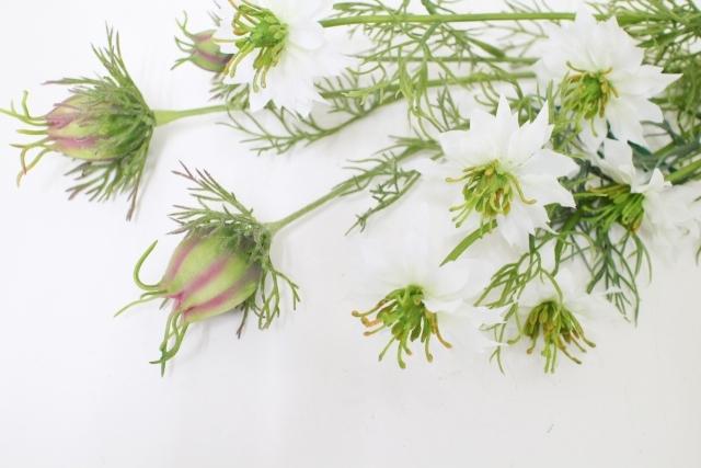 ニゲラとはどんな植物?その特徴・利用方法や上手な育て方をご紹介!