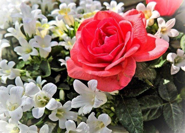 3月の誕生花まとめ!1日〜31日それぞれの花の特徴・花言葉を解説!