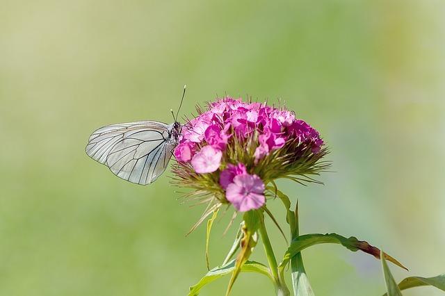 5月の誕生花まとめ!1日〜31日それぞれの花の特徴・花言葉を解説!