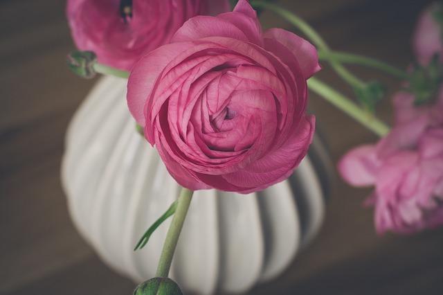 ラナンキュラスの花言葉とは?ピンク・赤・白・紫など色別にご紹介!