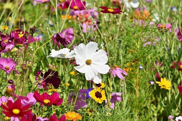 ワイルドフラワーとは何か?その意味や種類をご紹介!代表的な花は?