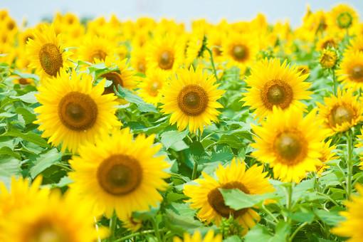 長居植物園ってどんなところ?必見の植物や見どころを季節別に紹介!