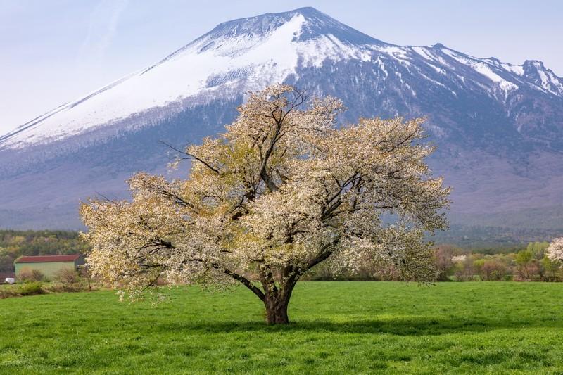 春の果物12選!春が旬な時期となるフルーツの特徴や食べ方をご紹介!