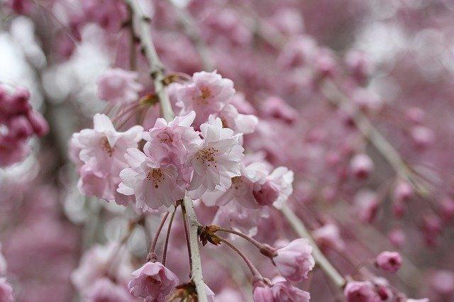 宇治市植物公園ってどんなところ?必見の植物や見どころを季節別に紹介!