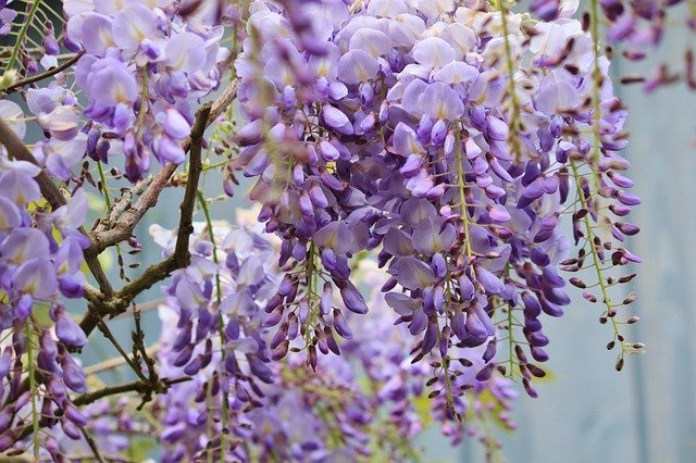 万葉植物園(市川)とは?おすすめの時期・季節や見どころをご紹介!