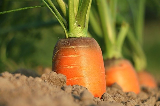 3月に種まきできる野菜6選!絶対育てるべき春植え野菜は?