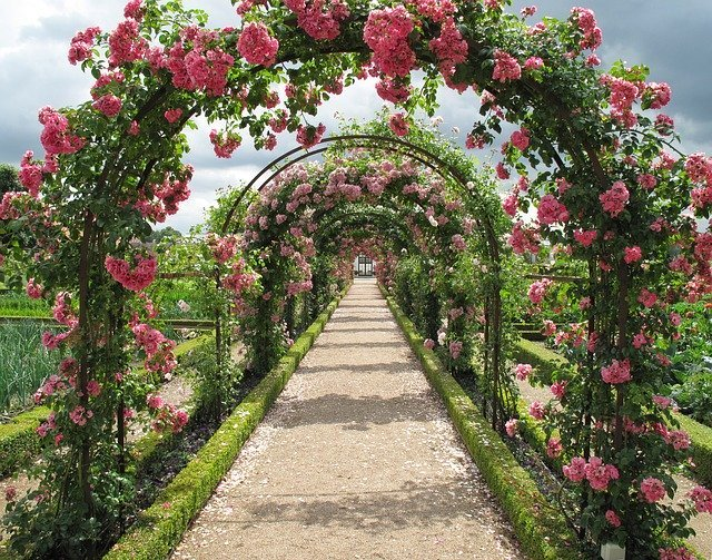 福岡市植物園ってどんなところ?おすすめの訪問時期や見どころは?