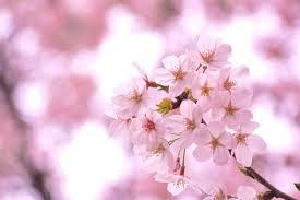 広島市植物公園ってどんなところ?おすすめの時期や見どころは?