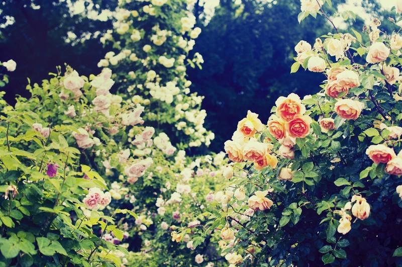 花の文化園(大阪)ってどんなところ?おすすめの時期や見どころは?