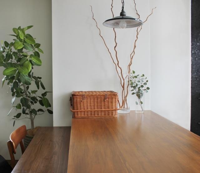 ゴムの木の飾り方6選!インテリア性の高い植物をおしゃれに飾ろう!