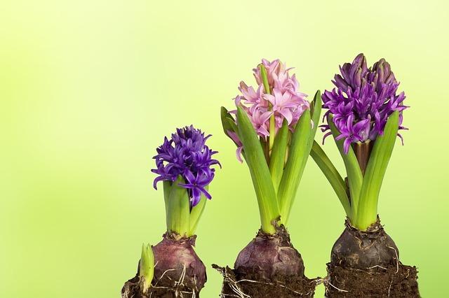ハイドロカルチャーとは?植物を枯らさず育てるためのポイントを解説!