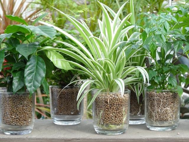 ハイドロボールとは?どんな種類がある?どんな観葉植物に使うべき?