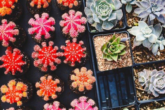 多肉植物といえばコレ!初心者でも育てやすい人気の代表品種を13種紹介!