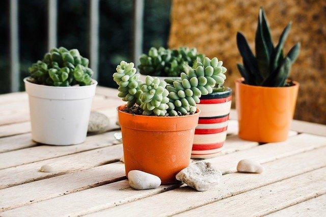 多肉植物の「鉢」の選び方!多肉植物向けにおすすめの鉢も5つご紹介!