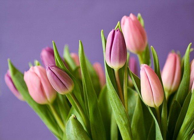 球根から咲く花といえば?春夏秋冬・季節別の球根植物を60種類ご紹介!
