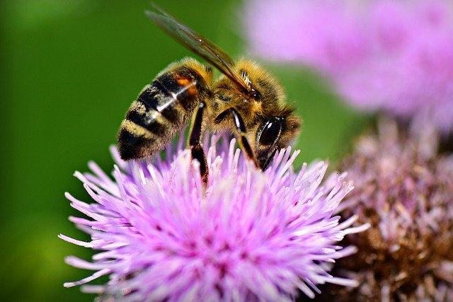 アザミ(薊)の花言葉は?色別に意味は違う?開花時期などの特徴も解説!