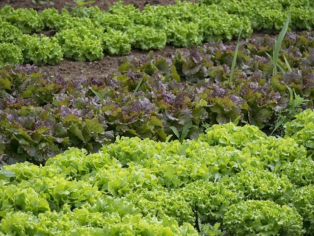 HB-101の特長と使い方を解説!植物活力剤として実際に効果はある?
