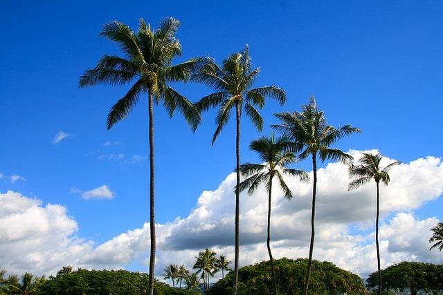 ヤシの木とは?南国の木としての種類や特徴を紹介!ココナッツのこと?