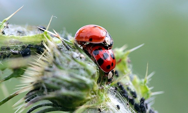 アブラムシを無農薬で駆除する方法18選!手軽にできる予防・対処法は?