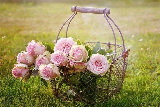 【季節別】おすすめ園芸種20選!春夏秋冬それぞれ育てやすい花を紹介!