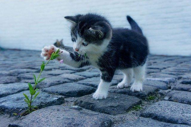 エノコログサとは?猫じゃらしとしても知られる植物の特徴をご紹介!