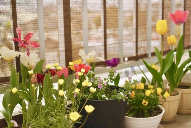ベランダガーデンを楽しもう!初心者にもおすすめの植物や飾り方を紹介!