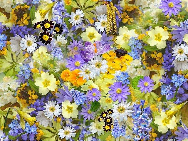 春の寄せ植えを彩るおすすめの花20選!初心者にも育てやすい花をご紹介!