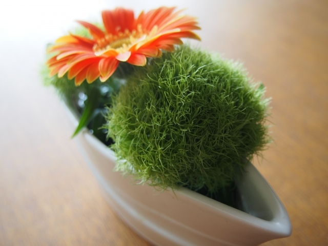 テマリソウ(手毬草)とは?花言葉・開花時期などの特徴や飾り方を紹介!