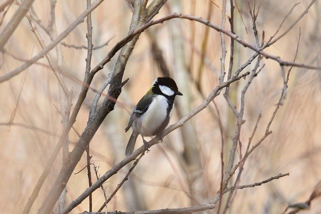 バードフィーダーおすすめ6選!庭造りの一環で、小鳥の餌台はいかが?