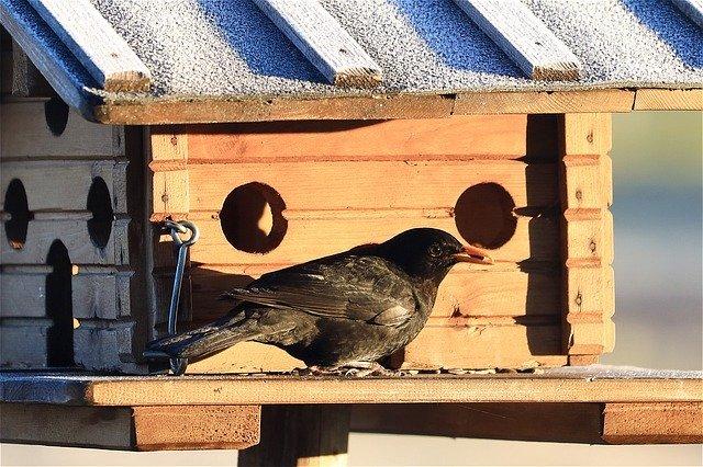 バードフィーダーの作り方!小鳥が集まる餌台の自作手順を簡単解説!