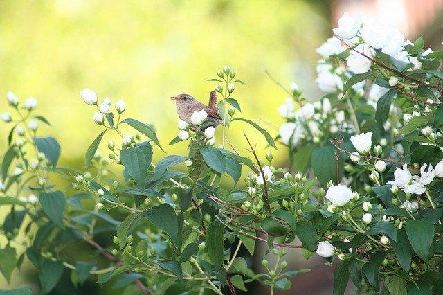 マルバウツギ(丸葉空木)とは?葉・花の特徴や基本の育て方を紹介!