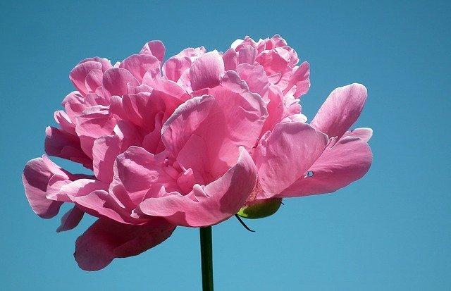 5月4日の誕生花は?育て方や色別の花言葉をご紹介!誕生石や記念日も