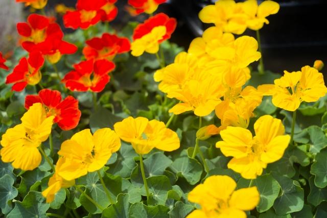 5月7日の誕生花って?特徴や花言葉、誕生石に記念日もご紹介!