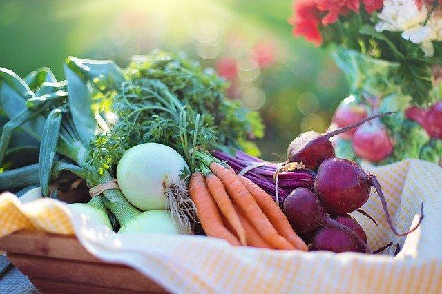 野菜くずで育てられる「再生野菜」とは?栽培におすすめの野菜もご紹介!