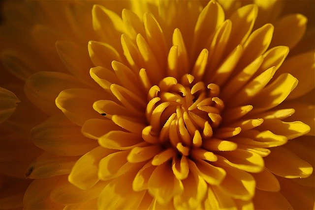 家紋に使われている植物一覧11選!各種の特徴や由来をご紹介!
