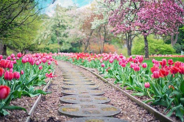 春に咲く花13選!開花時期や特徴を紹介!3月4月に咲く花といえば?