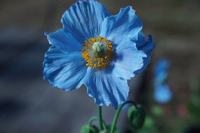 水色・青色の花一覧(15種)!各種の名前・特徴や花言葉などをご紹介!