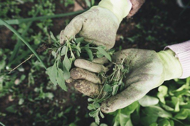 ダイソーで入手できる除草剤とは?100均の除草剤でも効果は十分?