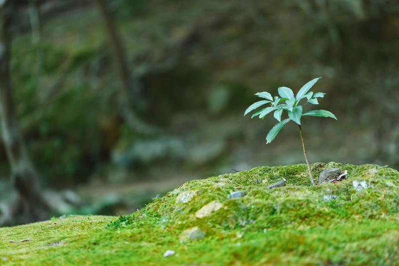 苔におすすめの除草剤3選!それぞれ効果の違いや上手な使い方を解説!