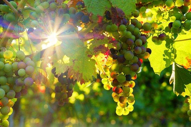 【山梨県】年中楽しめる!フルーツ狩りができる場所を季節ごとに紹介!