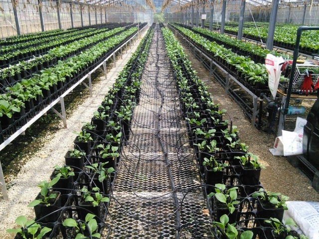 灌水チューブの種類と使い方!利用するメリットやおすすめ商品も紹介!